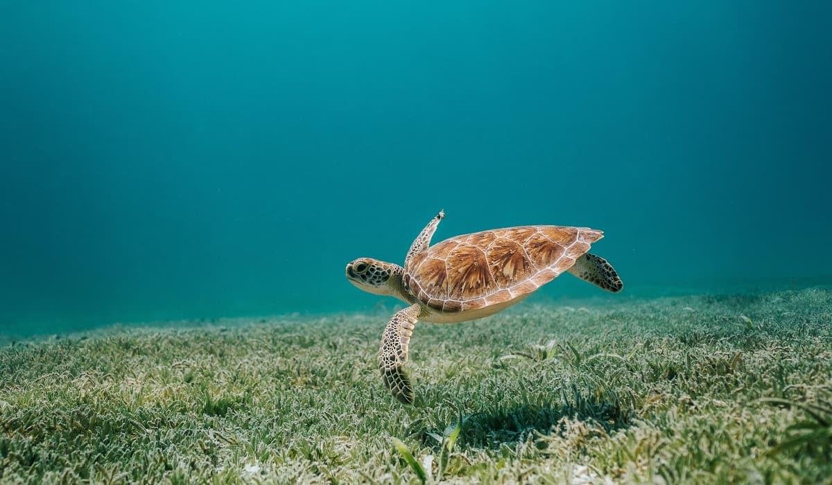 Cuidar l'oceà